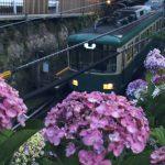 江ノ電を行く 紫陽花 桜