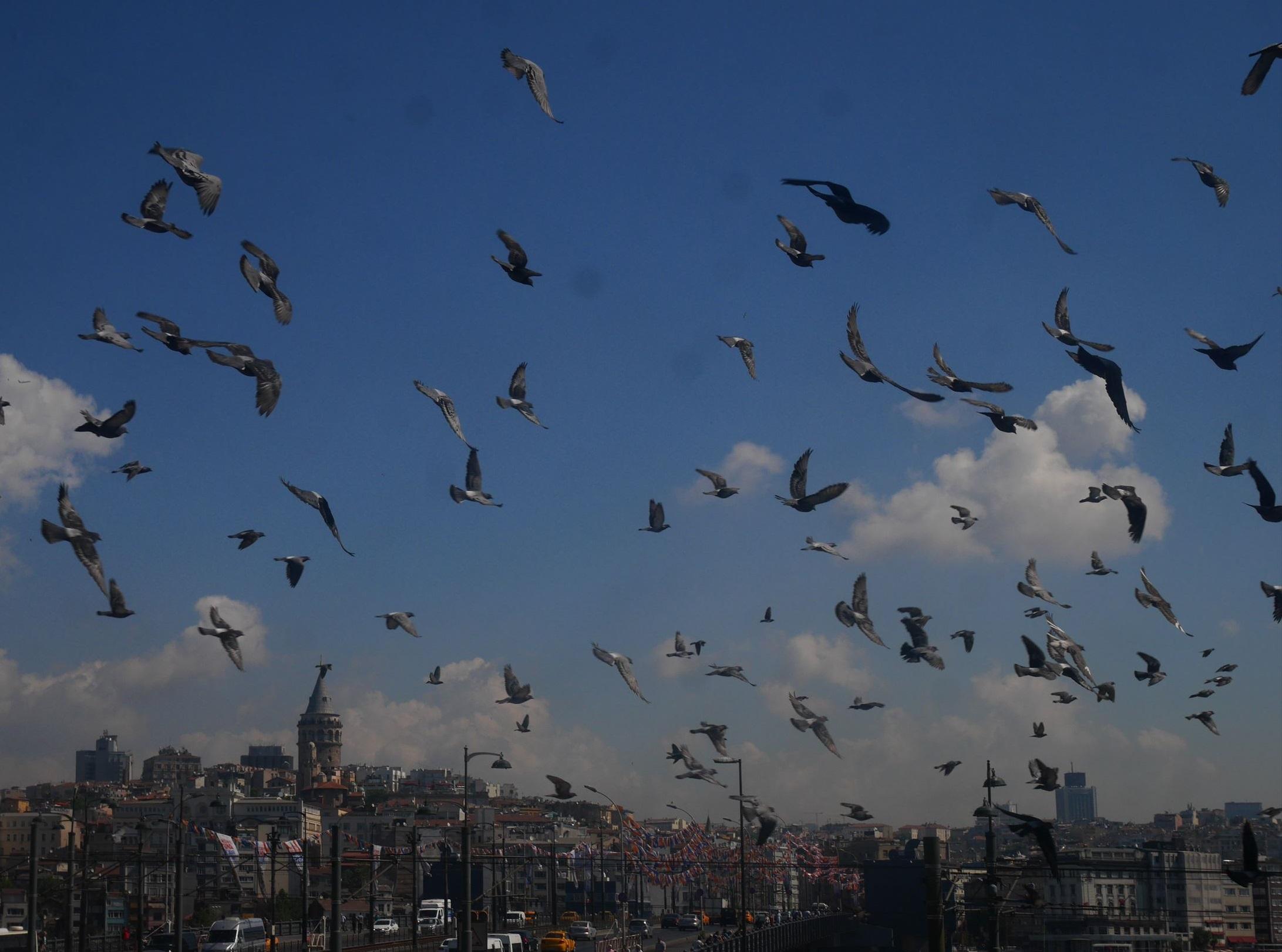 イスタンブールを歩き倒す