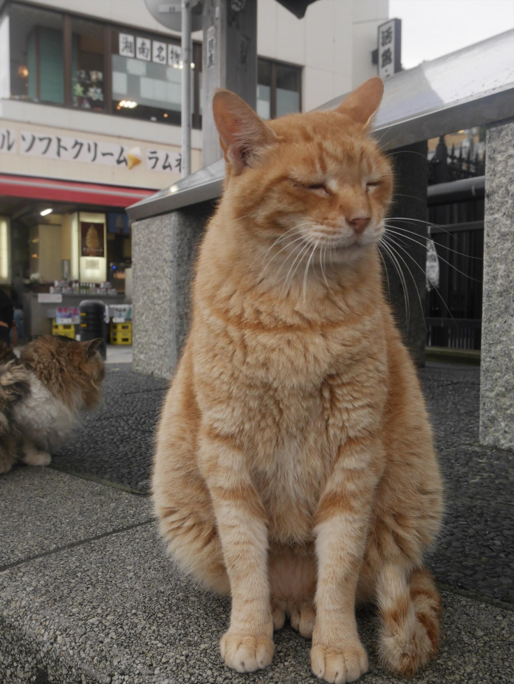 雨の江ノ島をお写んぽしてきた さすが猫島 雨天でも猫は健在
