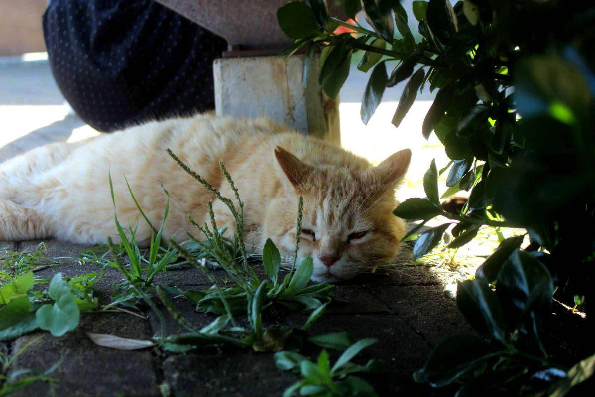城ヶ島公園の猫