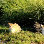 城ヶ島と言う猫ヶ島を一周してみた