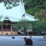 猫の多さに注意!想像を絶する猫寺 鎌倉の光明寺