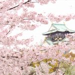 大阪城とグルメと桜