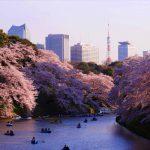 千鳥ヶ淵周辺の桜がやばすぎる!靖国神社、北の丸公園、戦没者墓苑