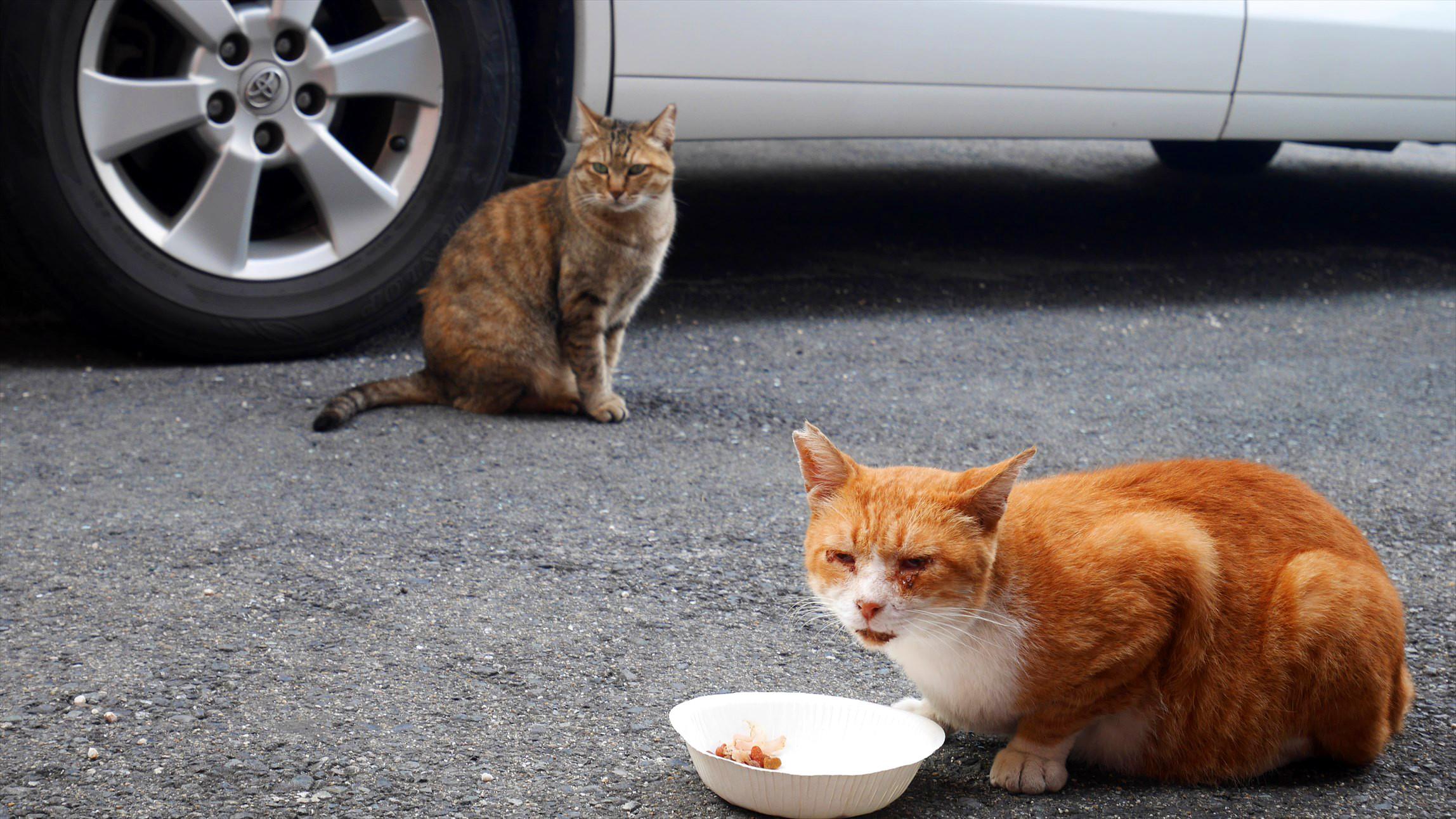 猫の楽園八坂神社と かっこいい小倉城