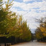日本最長の銀杏並木 秩父ミューズパーク
