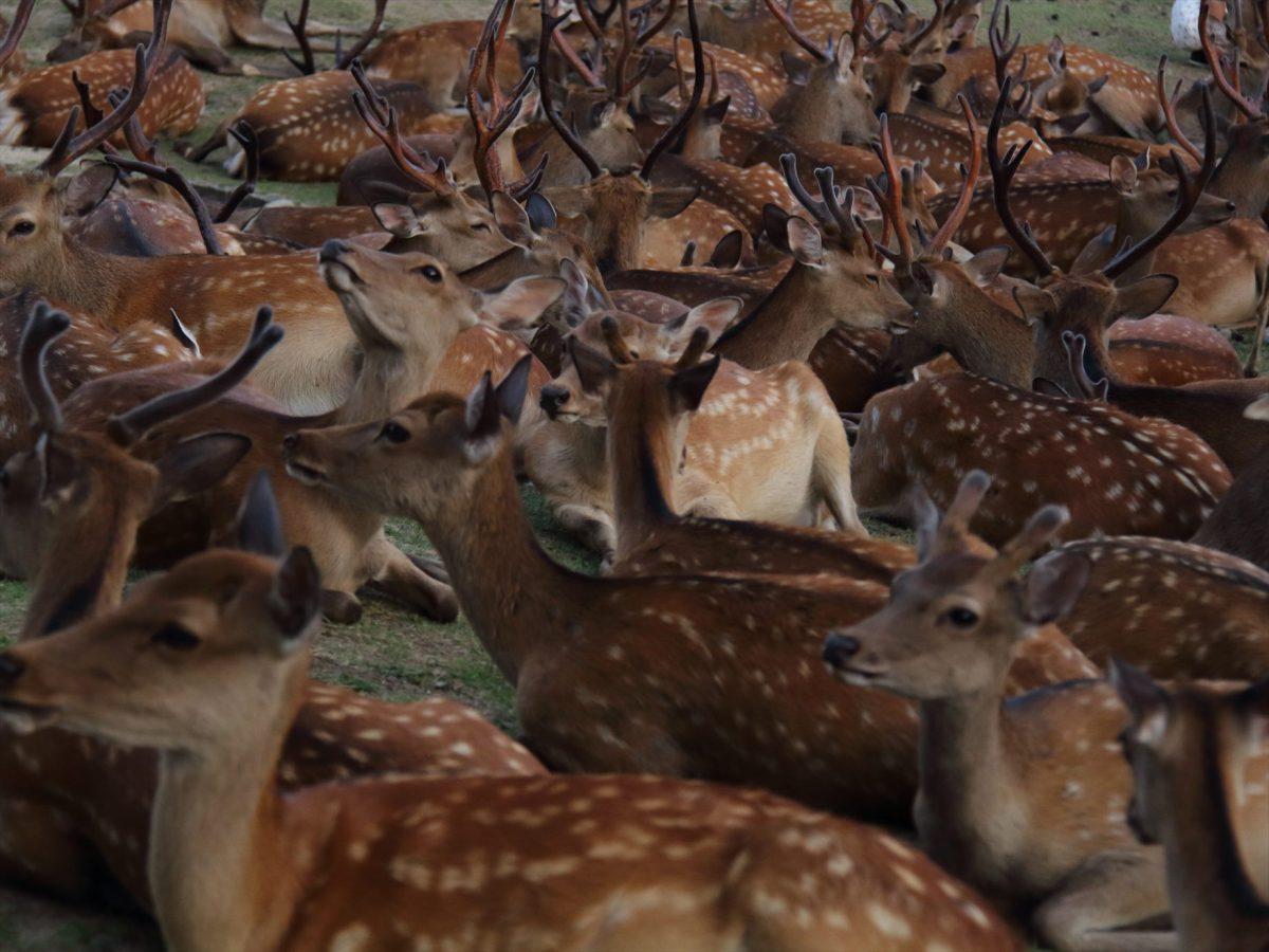 鹿だまり2