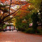 韓国・ソウルの紅葉を撮ってきた