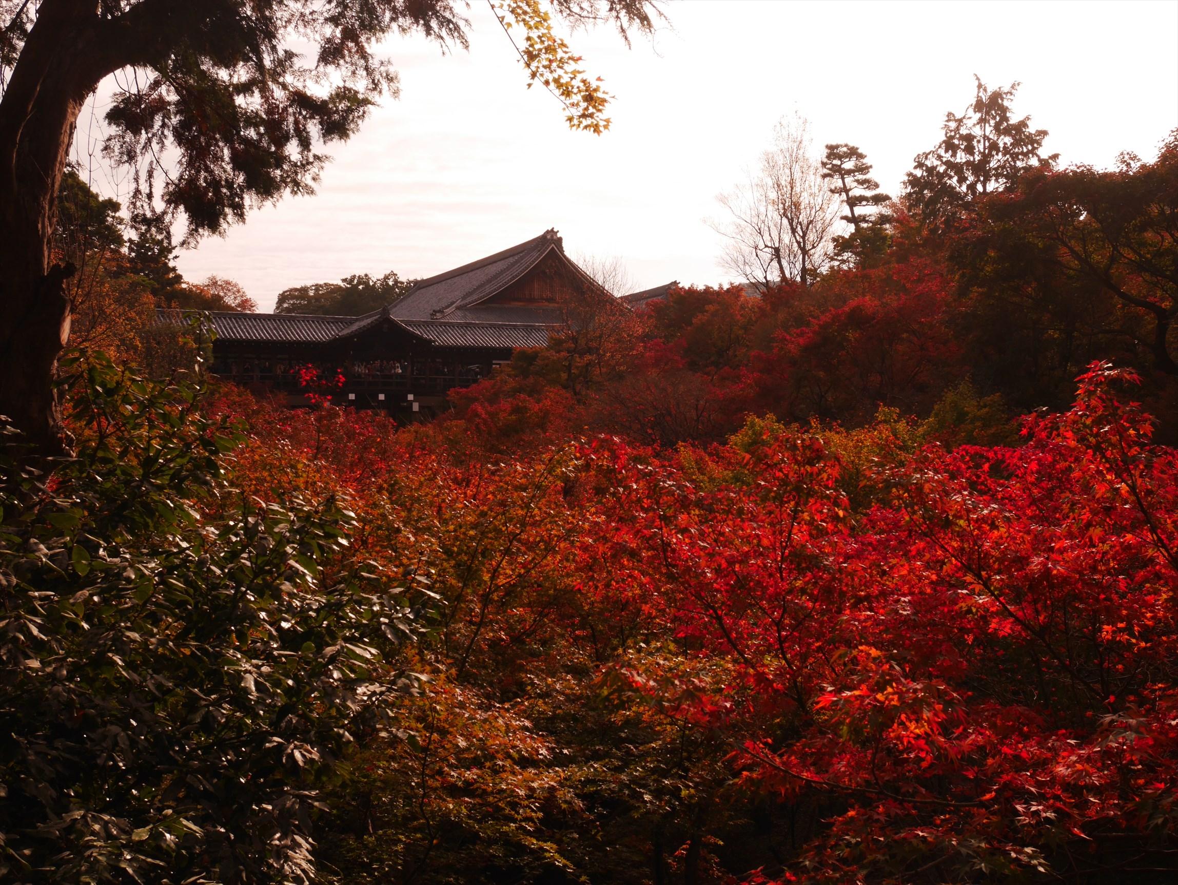 紅葉で有名な東福寺 開門直後の朝8時半に行ったら既に満員電車状態だった
