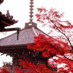 紅葉のシーズンの京都 真正極楽寺は本当に穴場だった