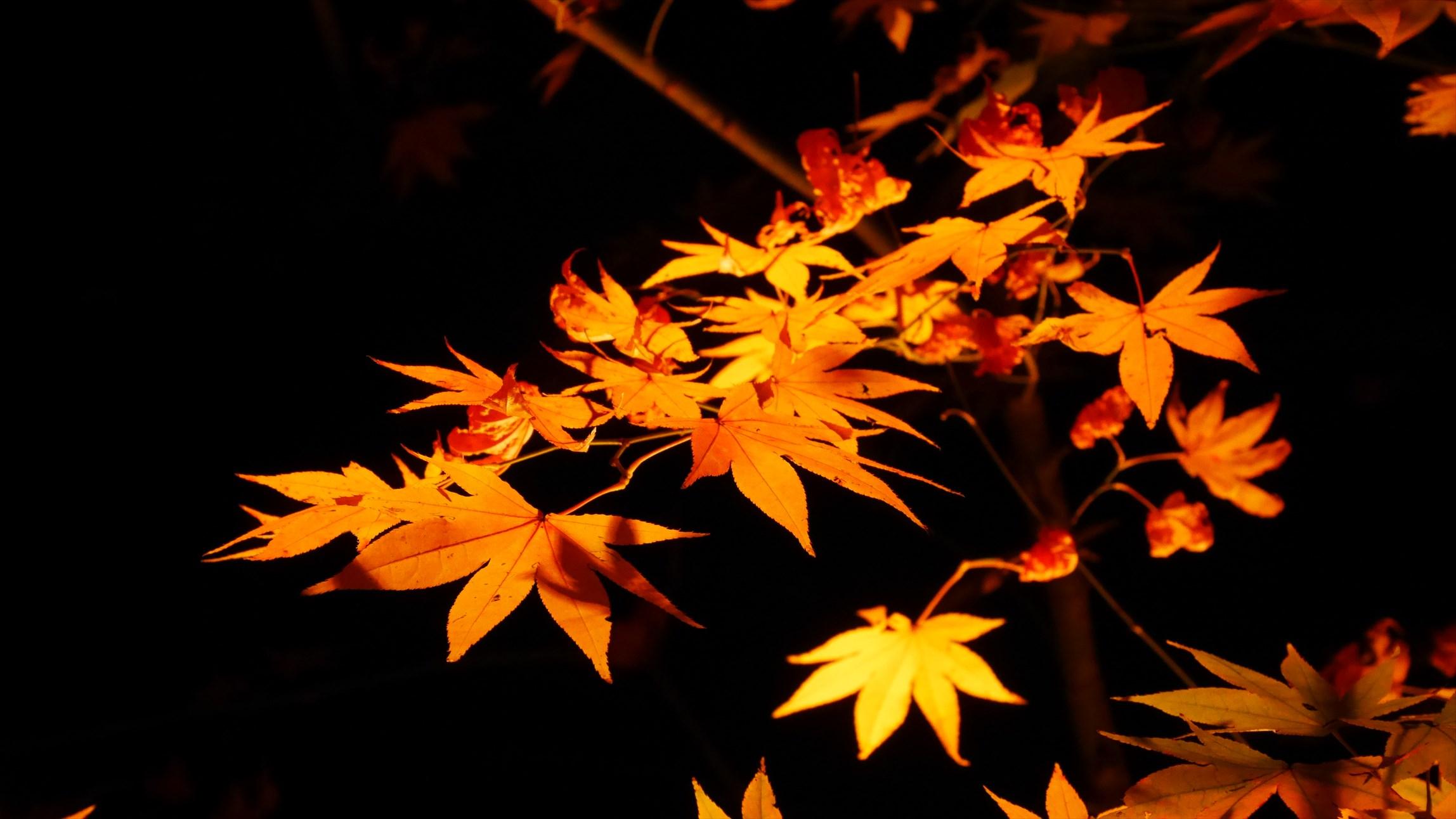 夜の京都の穴場 金戒光明寺
