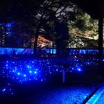 青蓮院門跡の幻想的なライトアップ