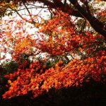 関東の紅葉