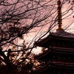 紅葉大凶作でも頑張った!松戸の戸定が丘歴史公園と本土寺