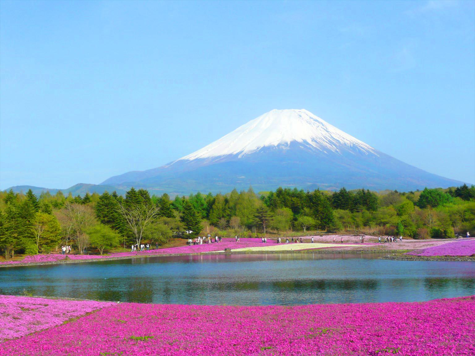 富士芝桜まつりに行ってきた!