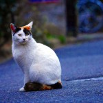 立石は下町葛飾区の猫町=^ω^=