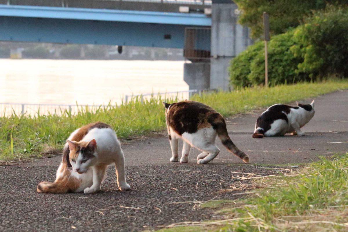 京浜運河沿岸の猫