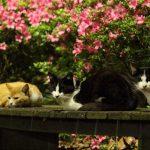 猫の多さにビビる!東京で一番 猫が多い「大井ふ頭中央海浜公園」