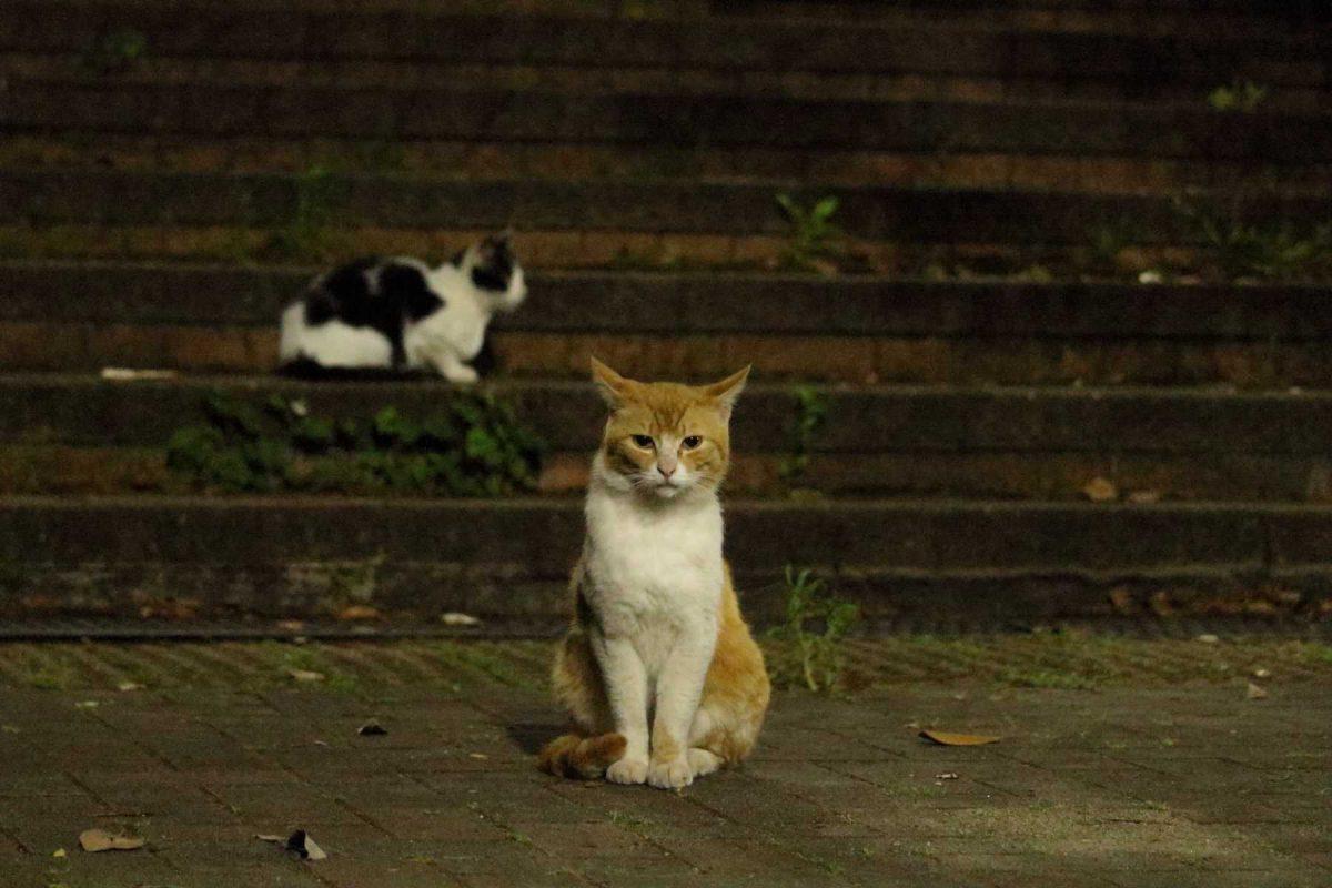 夜になると活発になる猫達