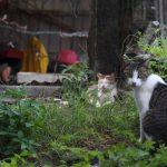 台湾一の猫の楽園 「猴硐猫村」(ホウトン)