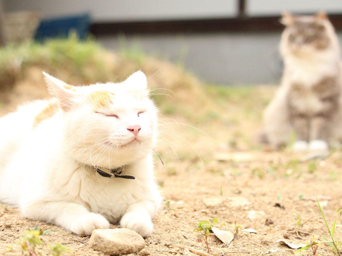 庭で居眠りする猫達