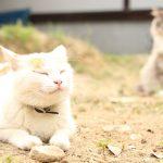 猫だらけ!日本最大の猫寺「御誕生寺」はアレからどうなったのか?