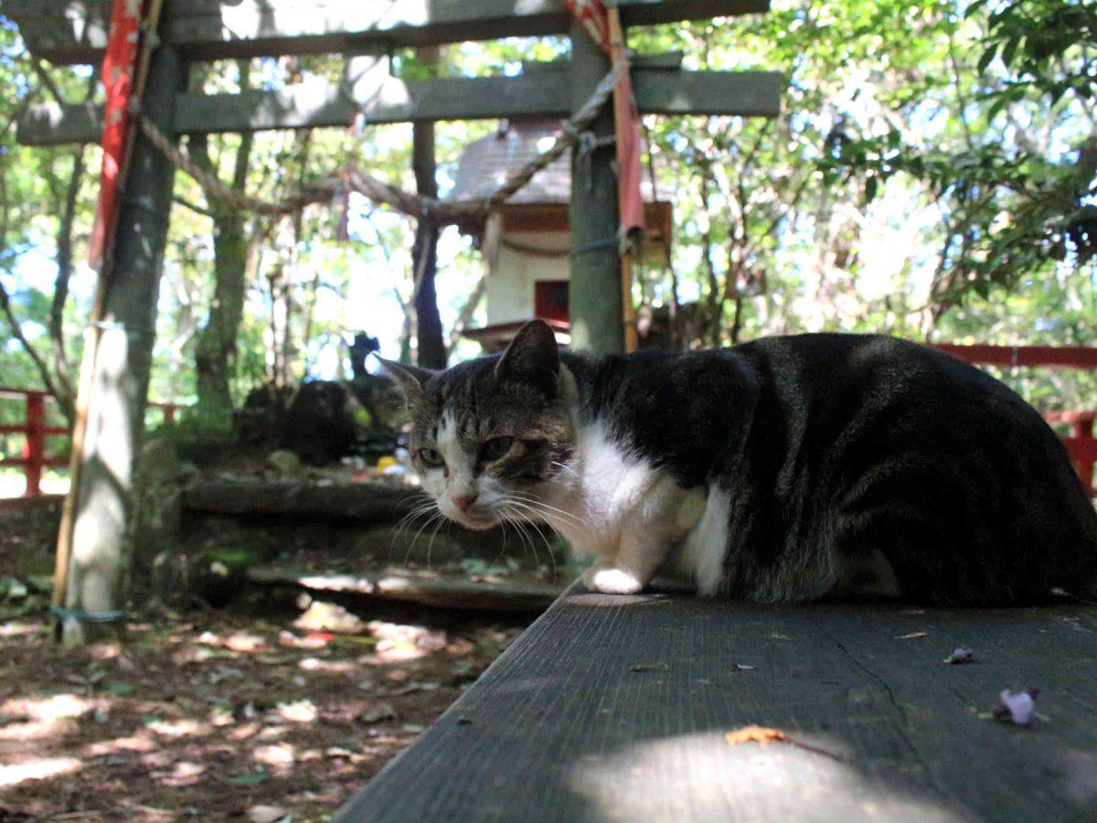 猫神社の猫