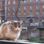 なんと!イタリアの猫はスパゲティ大好き!トッレ・アルジェンティーナ広場