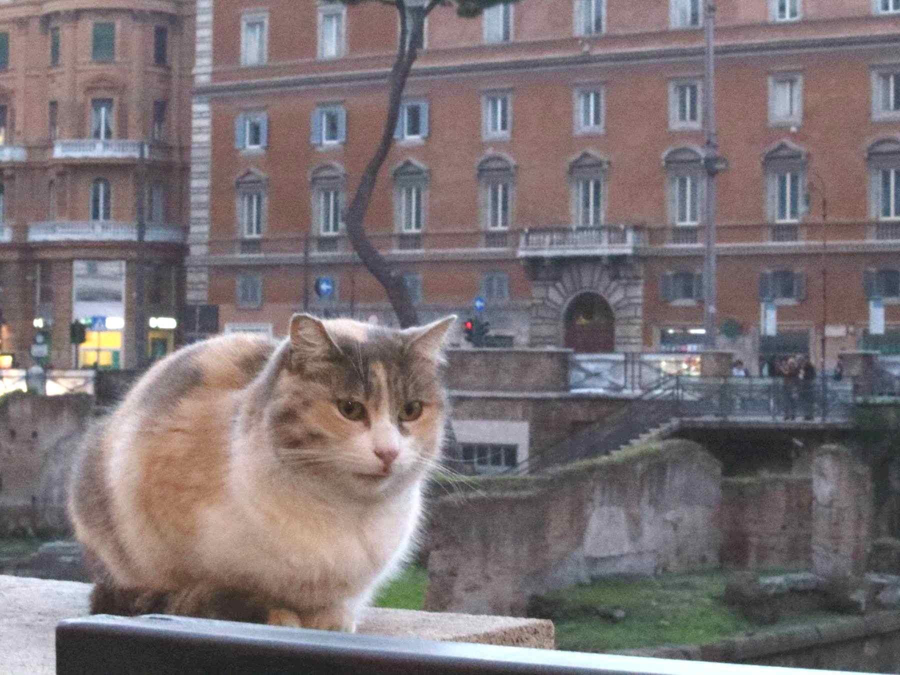 遺跡の壁に座る猫