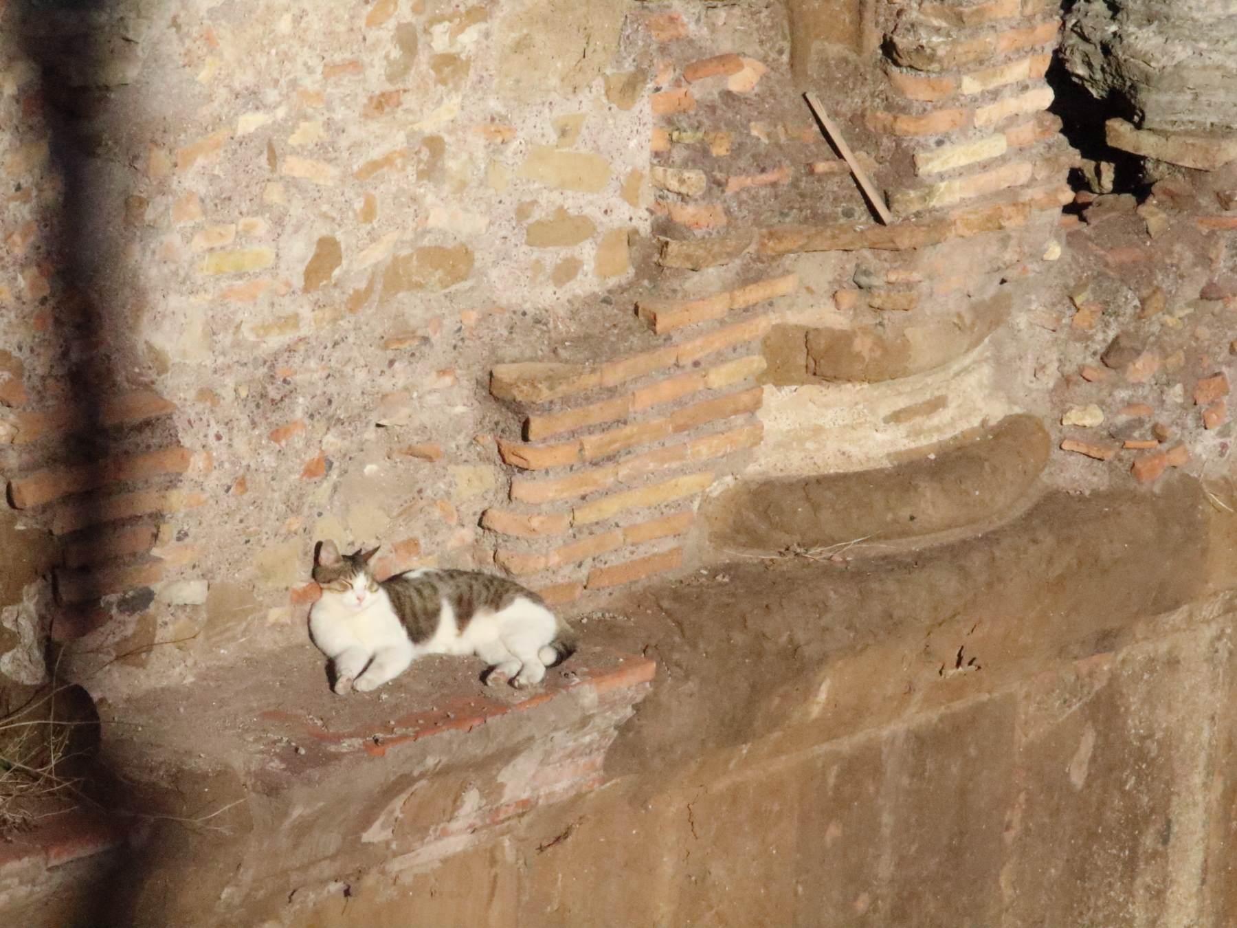 トッレ・アルジェンティーナ広場の猫
