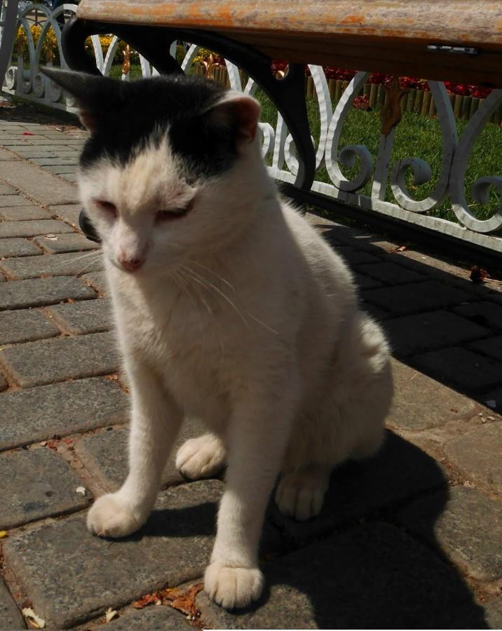 旧市街の猫