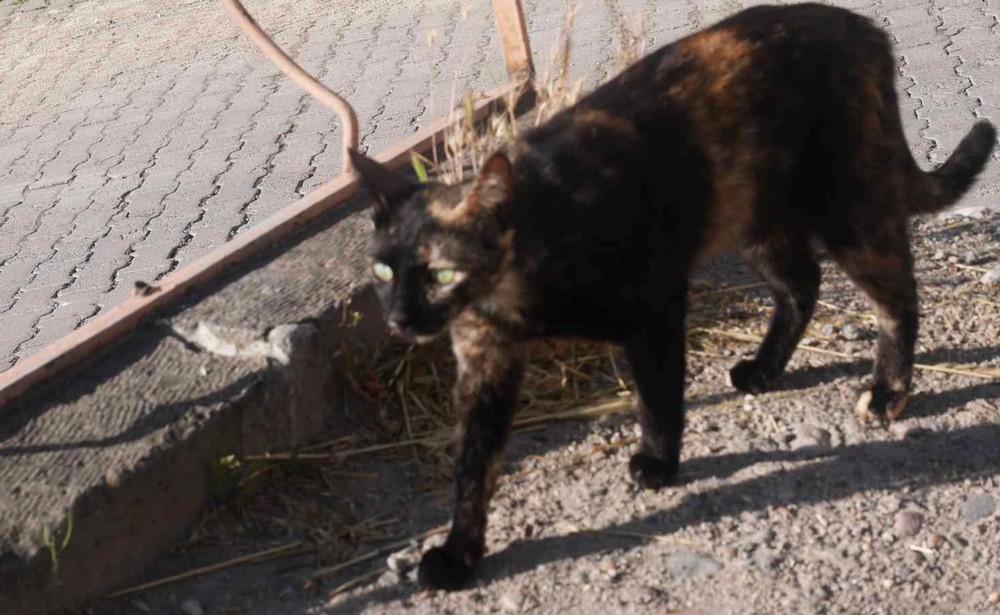カッパドキアの野良猫