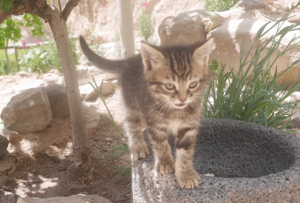 ウチヒサルの猫