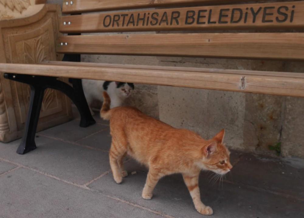 オルタヒサルの猫