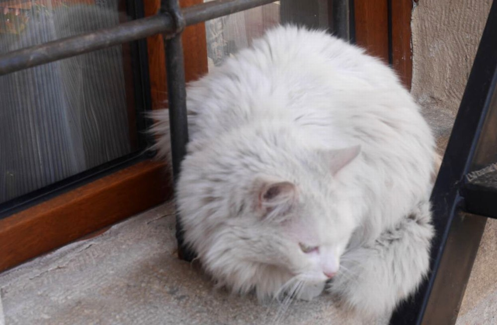ギョレメ猫
