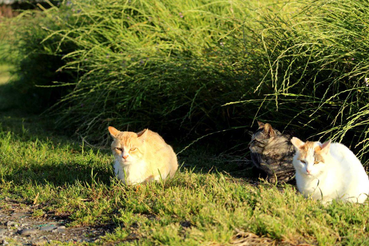 城ヶ島漁港の猫達