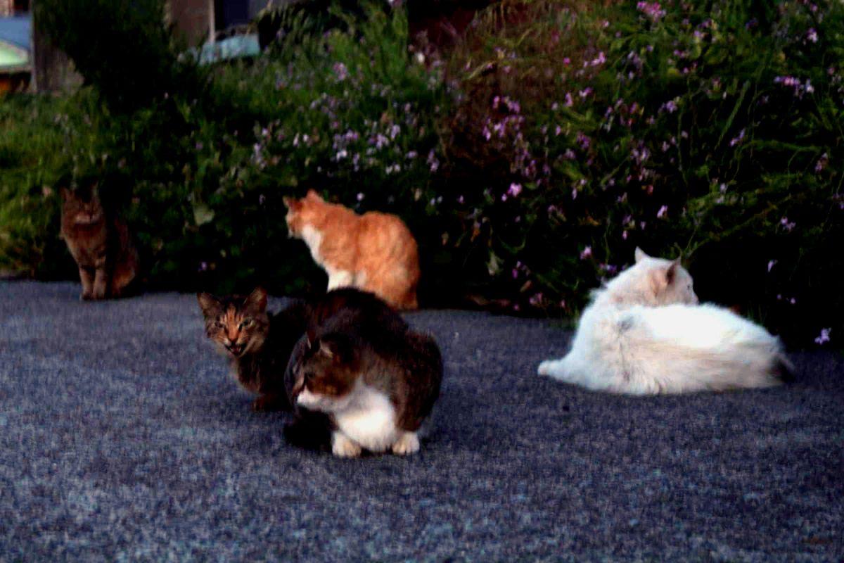 暗闇の中の猫の群れ