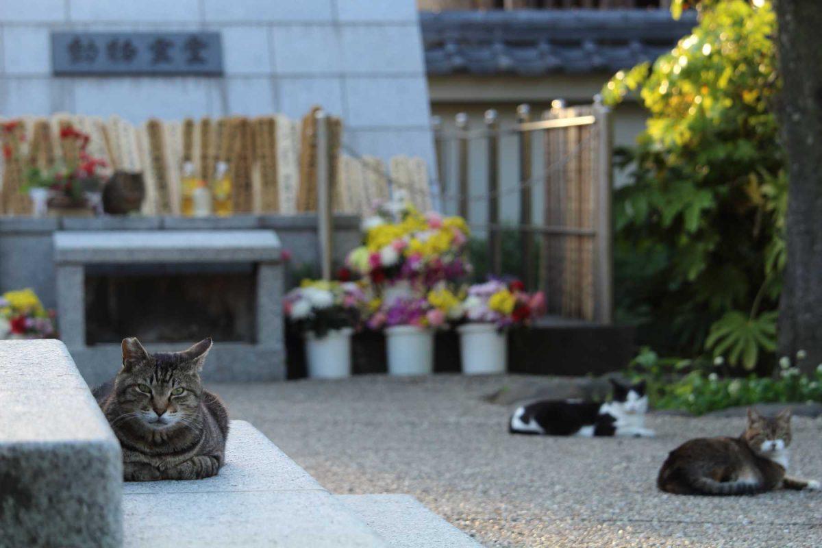 動物霊堂の前の猫達