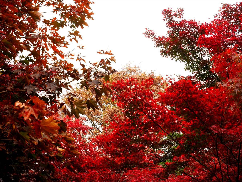 新宿御苑 新宿門付近の紅葉