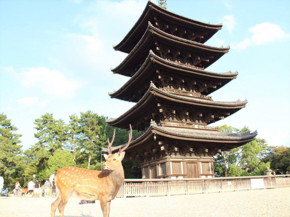 奈良の鹿とお寺