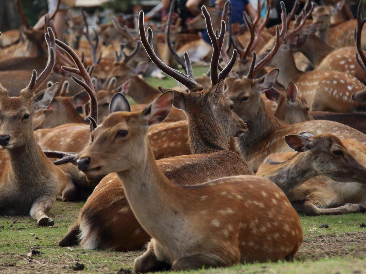 鹿だまり1