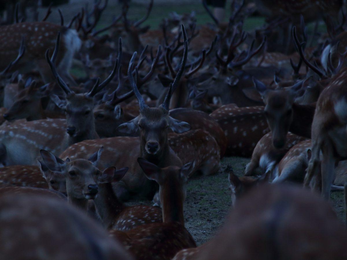 鹿だまり3