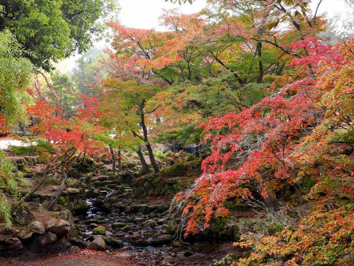 紅葉と奈良の鹿