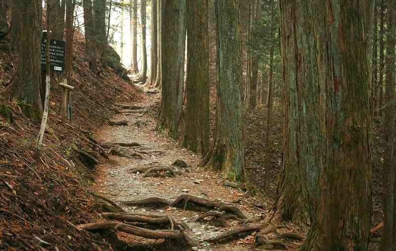 少しずつ急坂になる山道