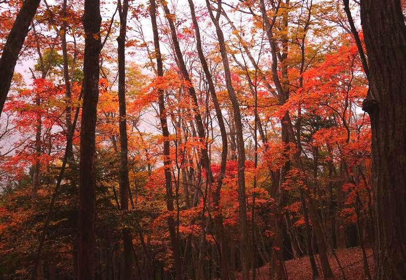 妙法ケ岳の紅葉