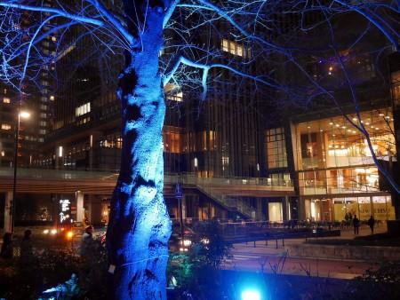 ライトアップした木