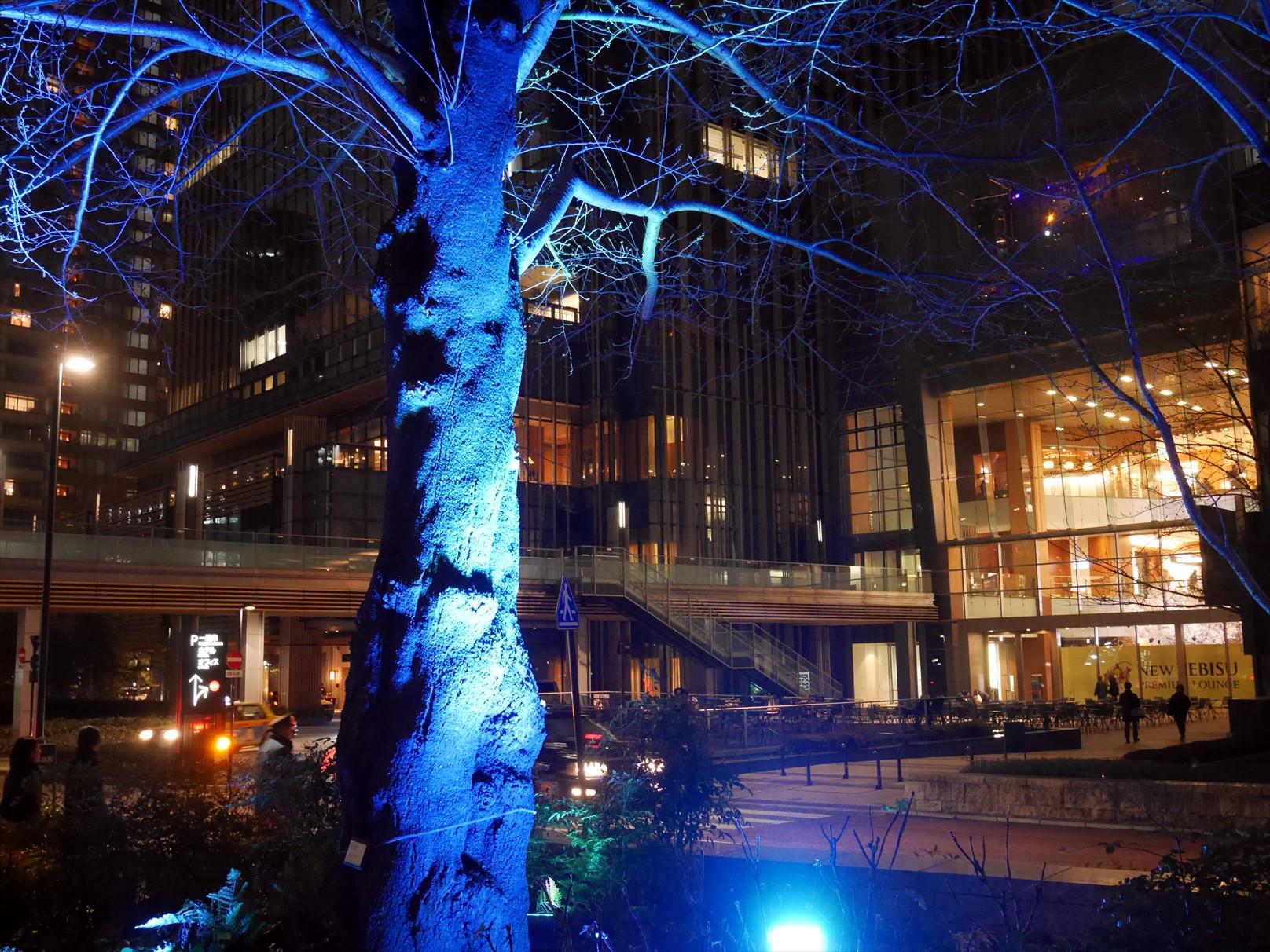 ミッドナイトでライトアップした木