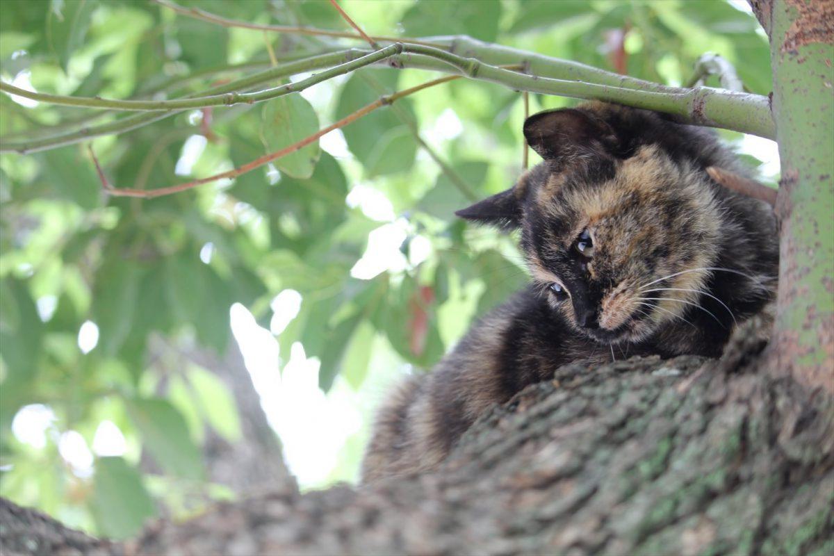 木の上にも猫