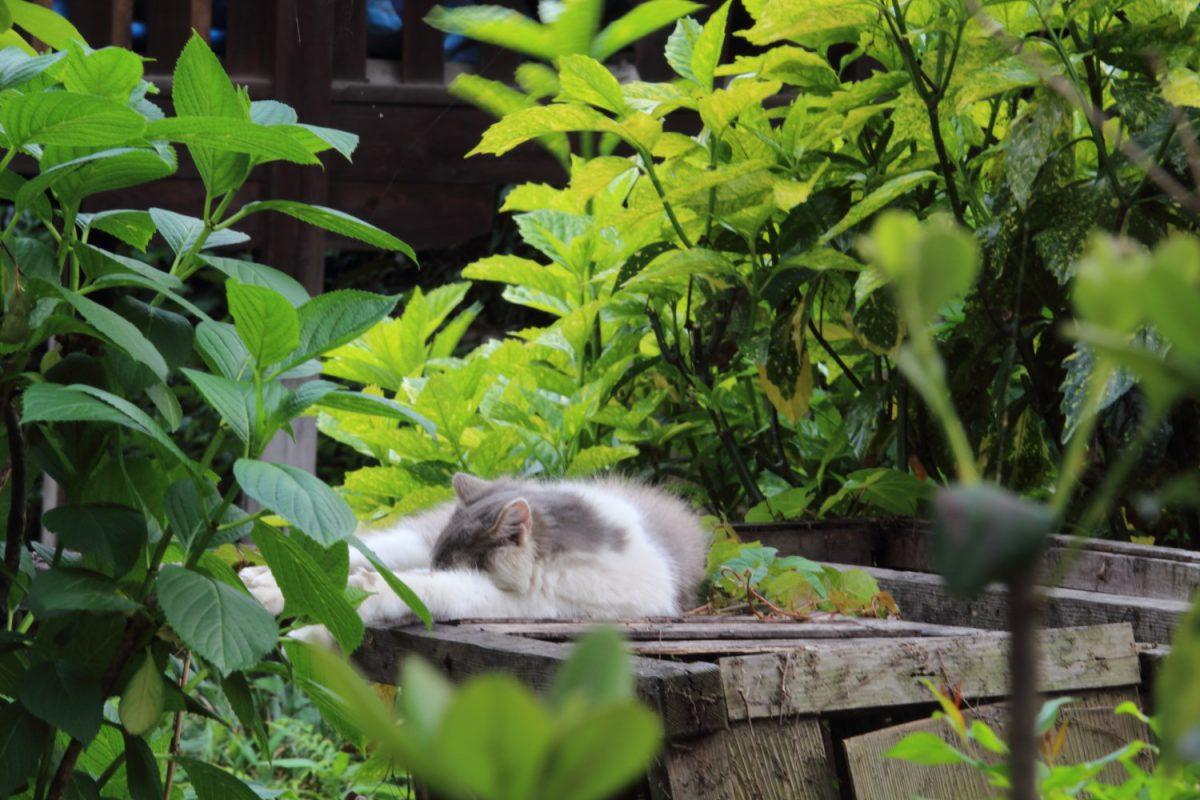 陽気遊山(よふきゆさん)の猫