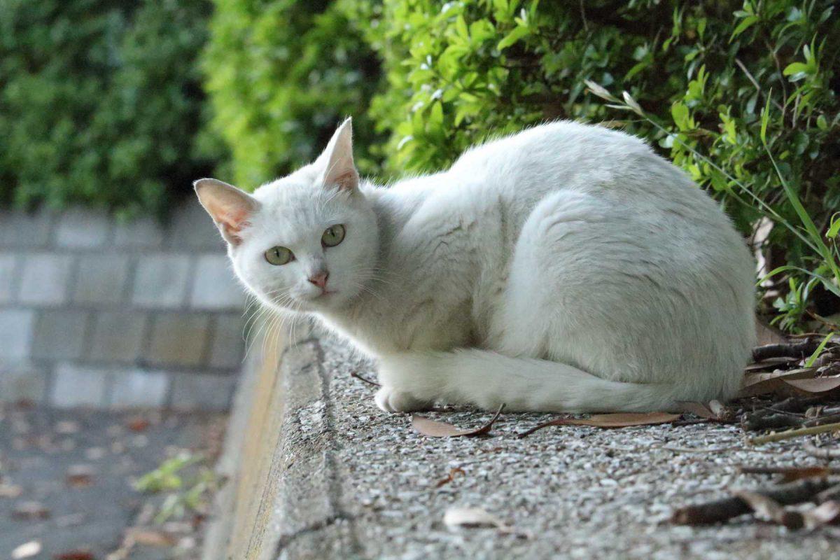 駐車場を見下ろす猫